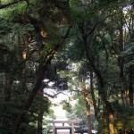 Japan, Travel, Meiji, Shrine, Tokyo