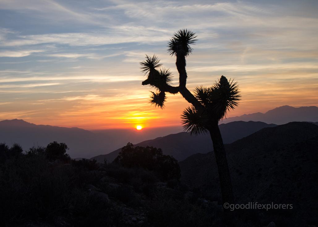 California; Joshua Tree National Park; travel; travel expert; adventure travel; solo female travel; couple travel; vacation; tourism; adventure; World Travel; tips; advice; How to; adventure travel
