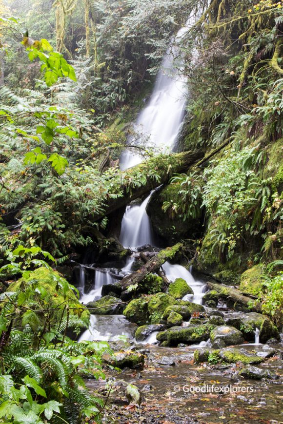 Merriman falls in Olympic National Park Forest in Washington