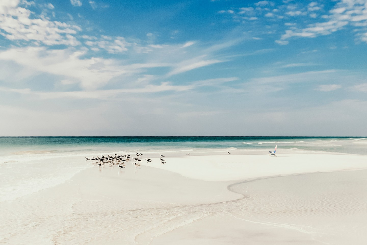 Sea birds on the Seagrove beach in South Walton Florida