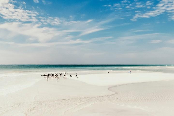 Sea birds on the Seagrove beach in South Walton Florida