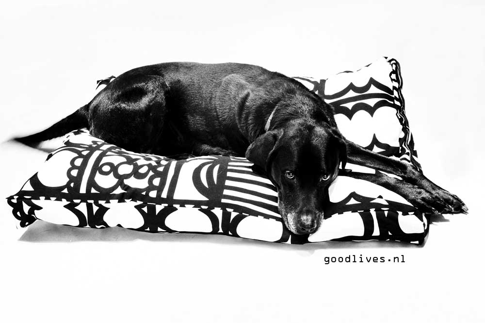 Bruno with new cushion (DIY)- on Goodlives.nl