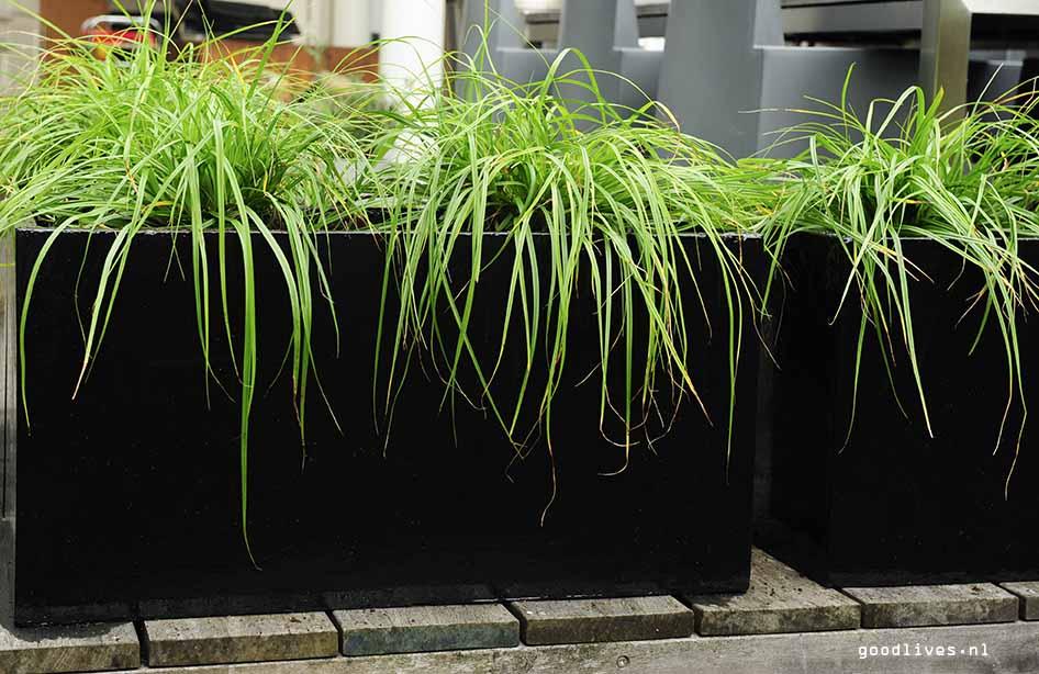 Planten in fiber clay plantenbak