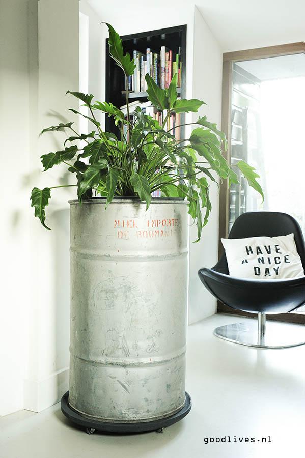 Honingblik als plantenpot in de keuken voor een stoer element