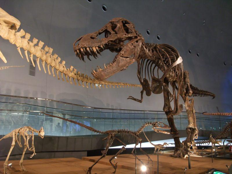 小朋友能玩得開心的樂園:【福井縣立恐龍博物館】 | 好運日本行