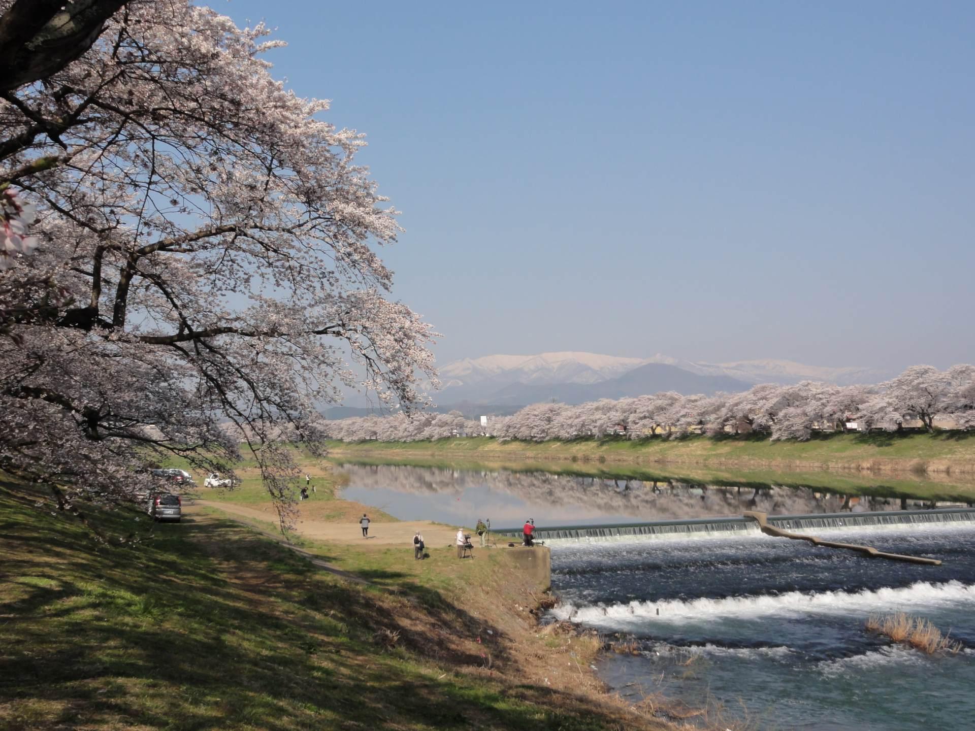 【東北地區櫻花景點總整理】東北六縣的必看賞櫻景點都在這裡了! 照片 - 2/8 -   好運日本行