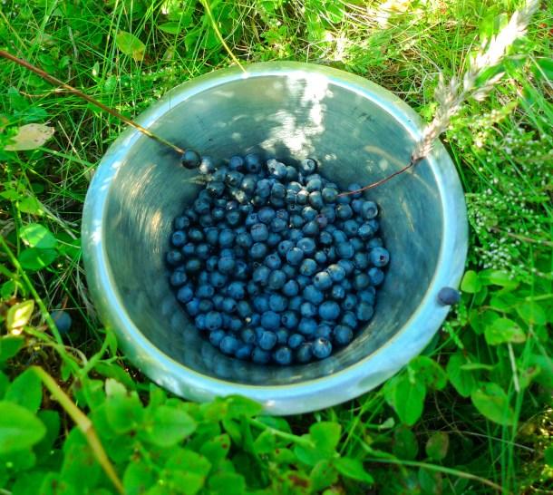 blåbærtur-3