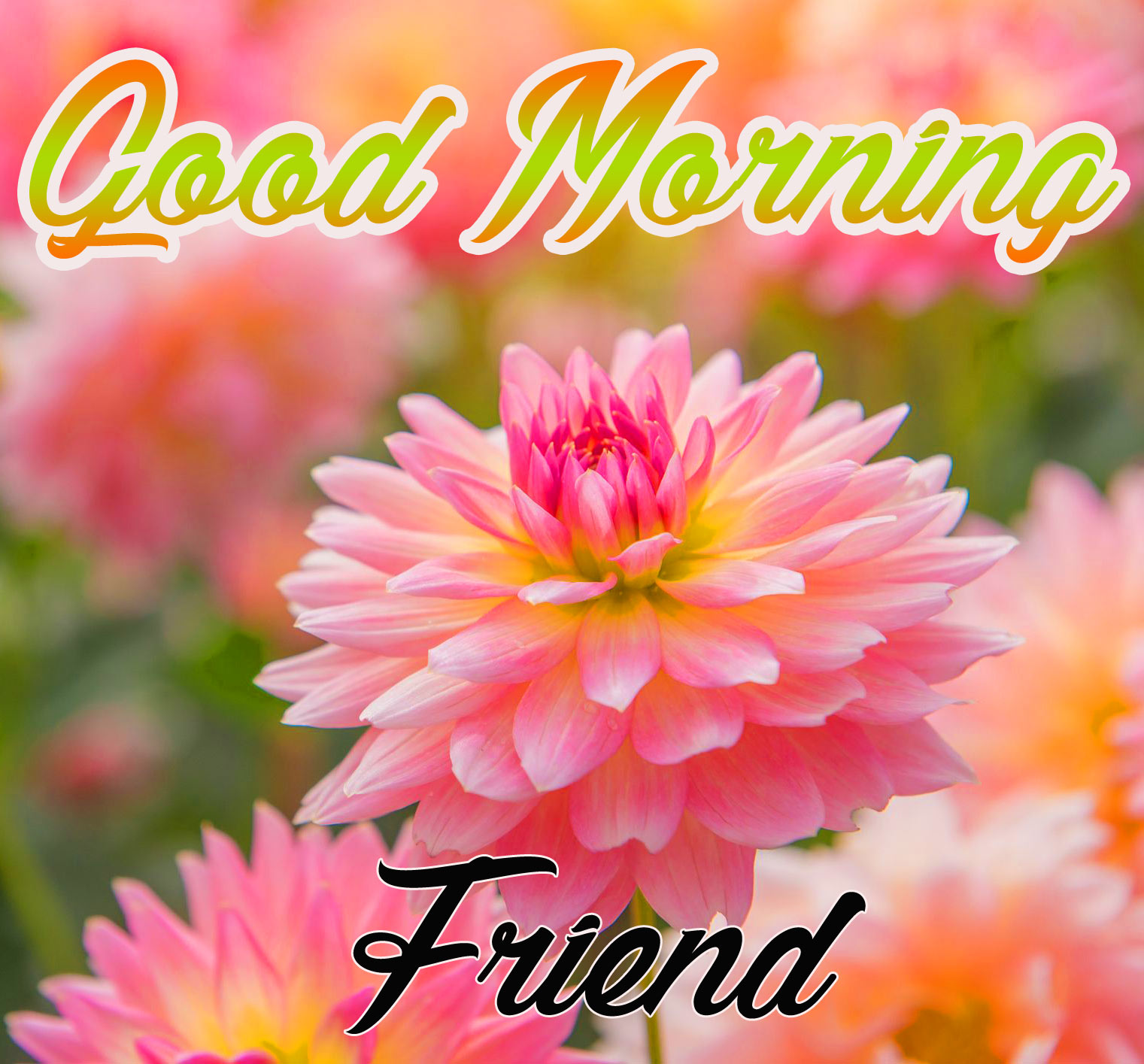 139 Latest Gm Pic Hd Free Download For Mobile Good Morning