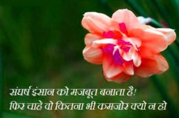 Hindi Life Whatsapp Profile DP Images Pics With Flower