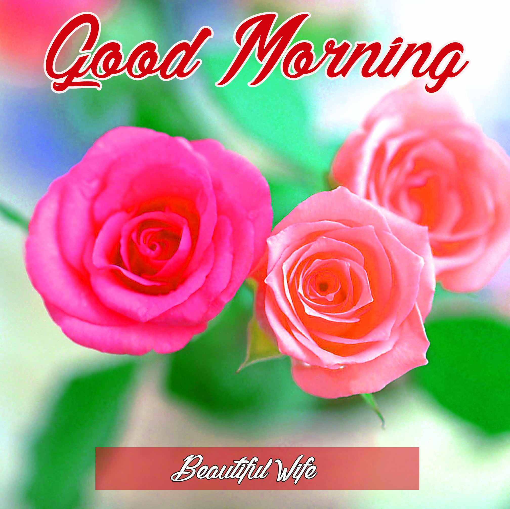184 Flower Good Morning Hd Images Wallpaper For Whatsapp Facebook Good Morning Images Good Morning Photo Hd Downlaod Good Morning Pics Wallpaper Hd