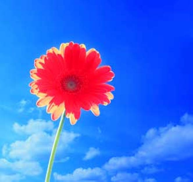 Best Flower For ProFile Images Photo