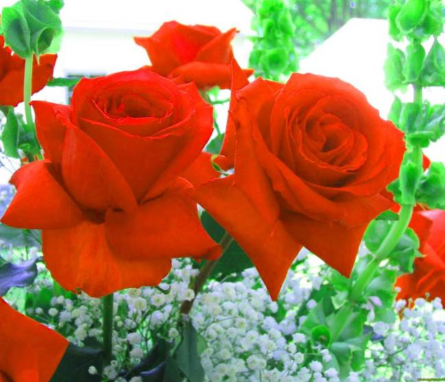 Best Flower For ProFile Pictures Images