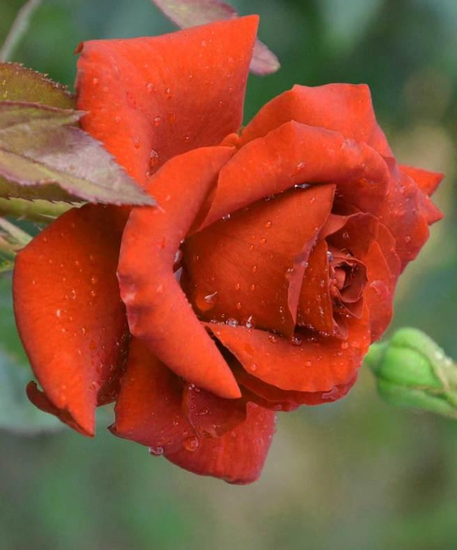 Best Flower Images For ProFile