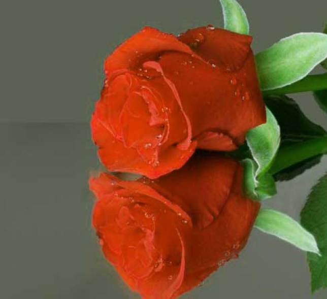 Flower For ProFile Images Photo