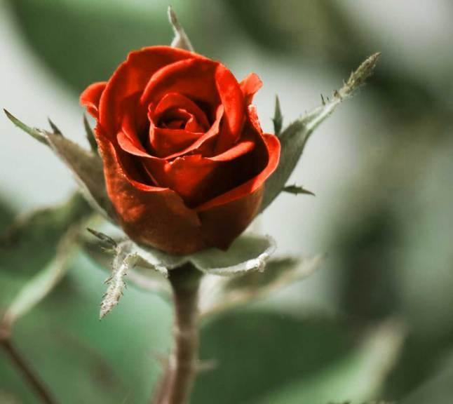 Flower For ProFile Images Wallpaper