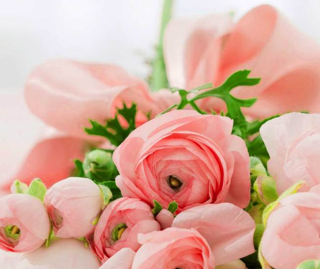 Flower For ProFile Pics Free
