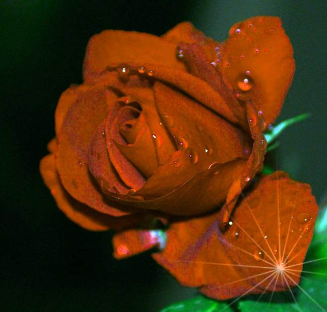 Flower For ProFile Pictures Hd