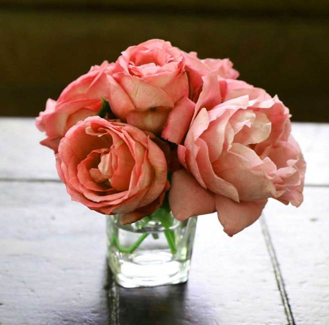 Flower For ProFile Wallpaper Photo