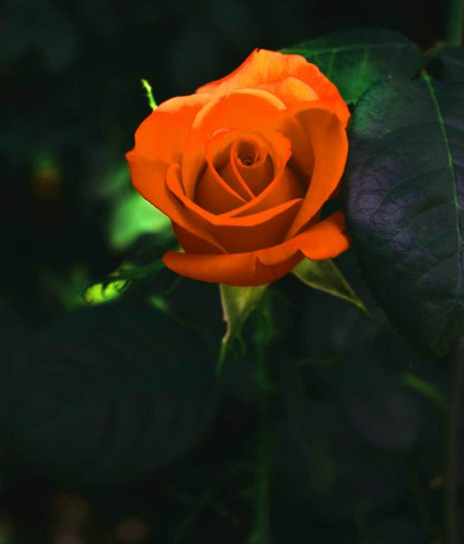 atest Flower For ProFile Images Download