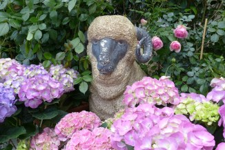 A sheep watching at hydrangeas at Moulie Paris