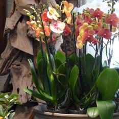 A beautiful orchid at Moulie Paris