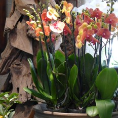 A beautiful orchid at Moulie Paris