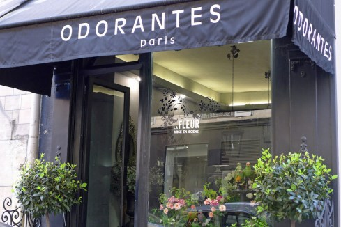 Odorantes Paris - flowers and parrots
