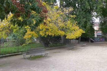 Jardin des Plantes-Paris-Trees