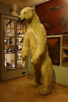 Musee de la chasse et de la nature - The Polar Bear