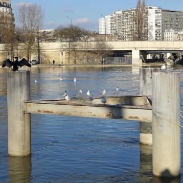 Jardin Tino Rossi-Seine flood and Sea birds