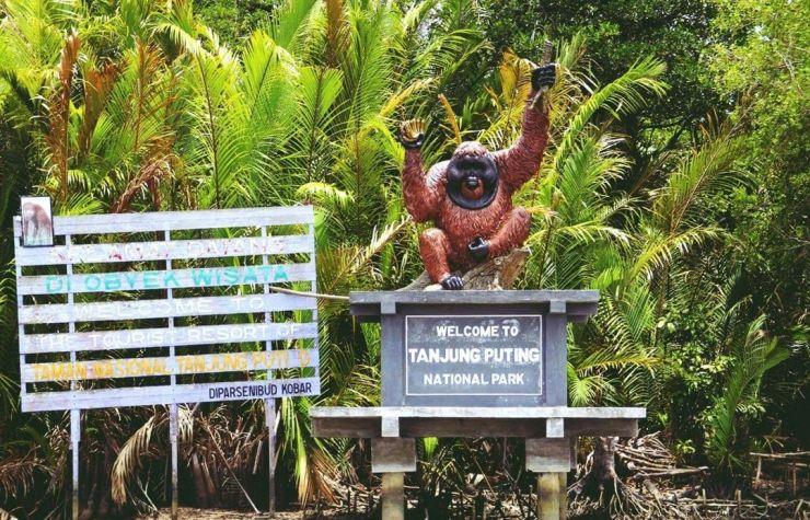 Taman Nasional Tanjung Puting | Foto: Unsplash