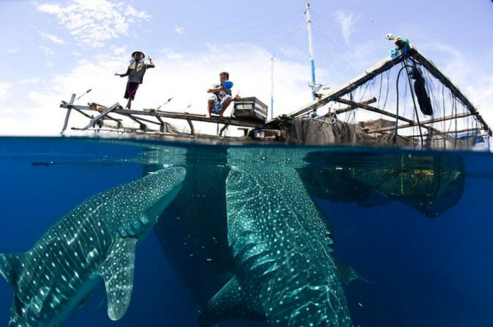Try These Challenging Diving Sites And You Ll Discover The Unknown Only In Indonesia