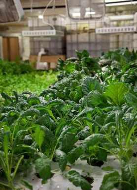 Farming urban Chicago - photo The Plant