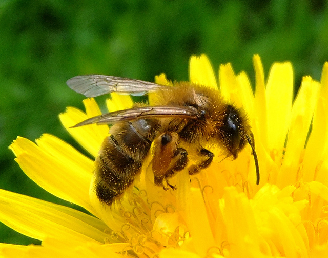 state is boosting bee
