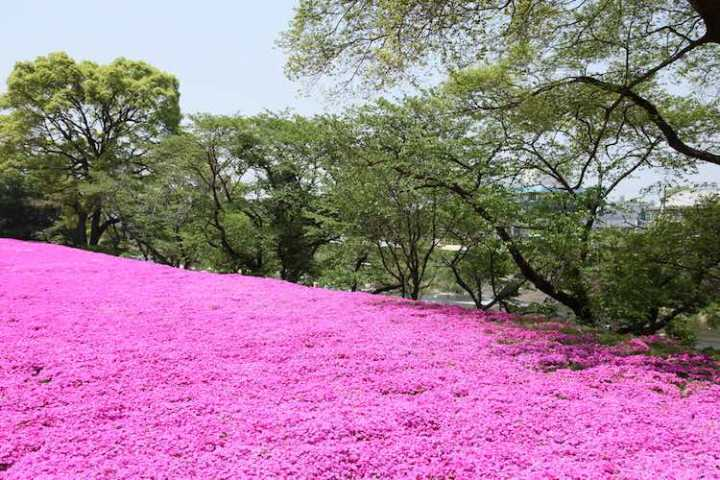 Flowers CC gtknj