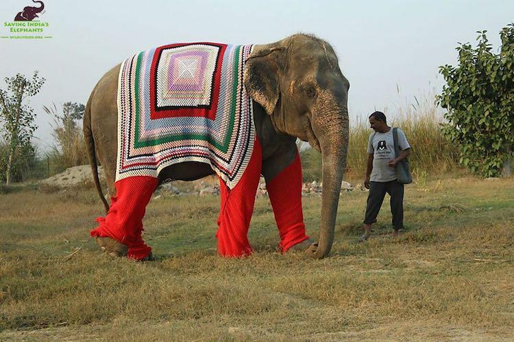 Elephant Sweater-Wildlife SOS