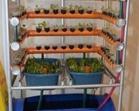 Urban vertical garden