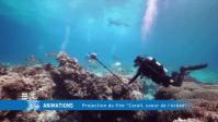 Monaco's Tubbataha Reef exhibit to come to PH in 2017