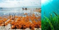 W Group Seaweed brings livelihood and peace