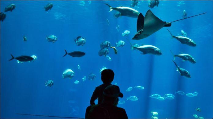 Philippines largest oceanarium