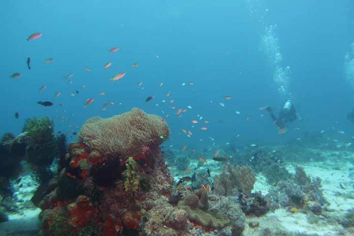 Philippine marine species