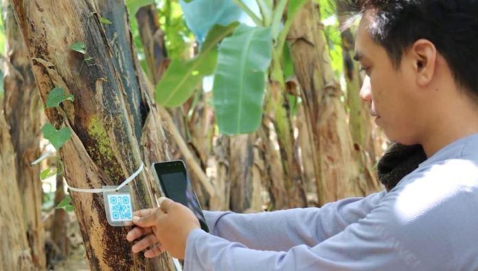 USEP Mobile Banana Disease Surveillance System
