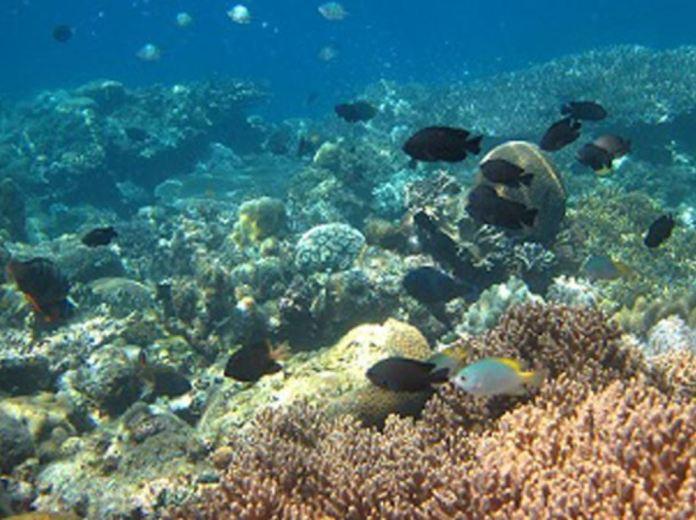 Underwater scene in Cebu. Photo from Cebu Provincial Tourism.
