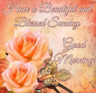 image of good morning with rose