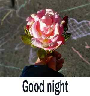 best rose good night image download