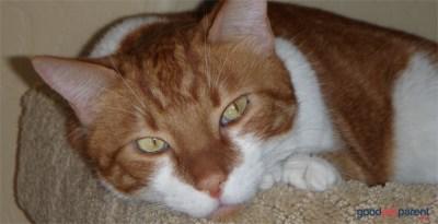 Jasper resting on cat condo