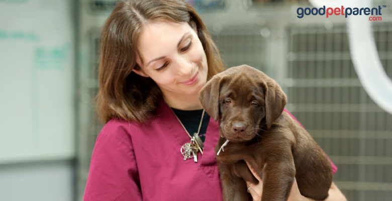 registered veterinary technician with a puppy