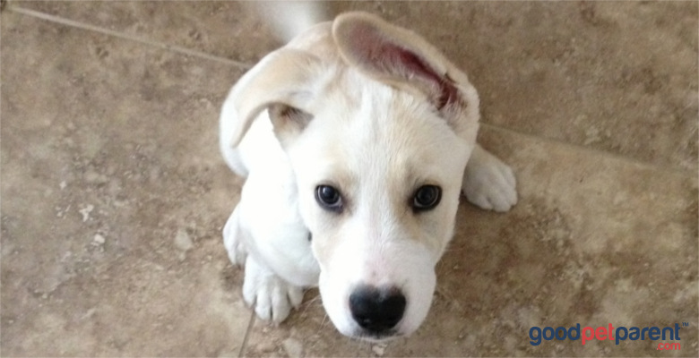 heartworm disease - testing and prevention for dogs