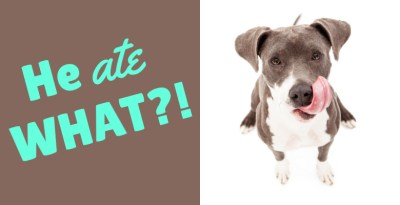 Good Pet Parent: He ate WHAT?!