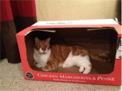 Jasper in a box